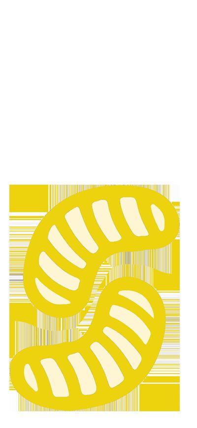 larve-insetto-proteiche-1